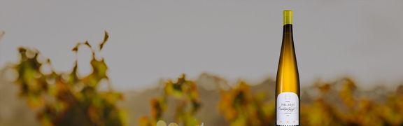 Вино недели: рислинг Семейный резерв, Сикоры